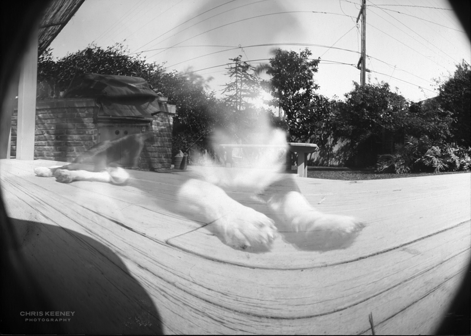 Pet Pinhole Photography Fred The Dog