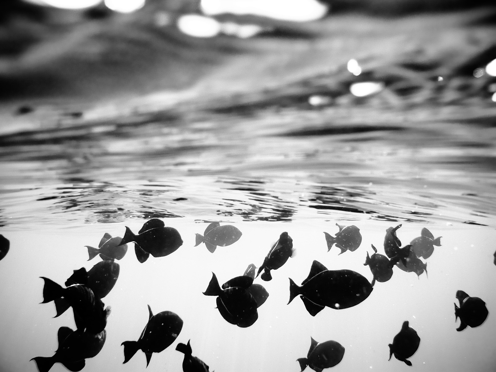 Black And White Underwater Photography Chris Keeney Photography - Amazing black white underwater photography